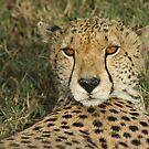 Duma eyes by Owed To Nature