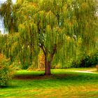 The Willow by Monica M. Scanlan