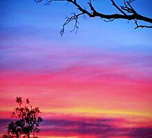 Botany Bay Sunset by Tamara Dandy