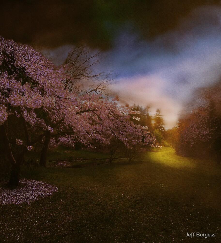 Illuminating perplexion - the park by Jeff Burgess