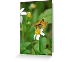 Fiery skipper on Spanish Needles Greeting Card