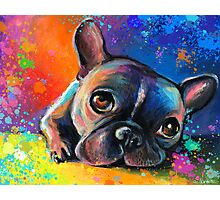 Whimsical French Bulldog painting Svetlana Novikova Photographic Print