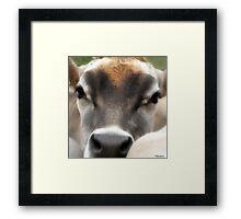 Cow  Eyes Framed Print