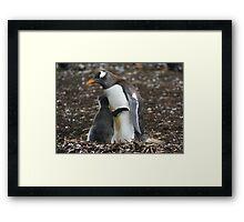 Gentoo Penguin and Chick Framed Print