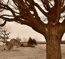 Tree-framed farm scene by mltrue