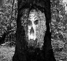The face in the tree by jadey182