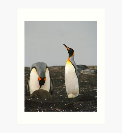 King Penguins with Chick and Egg Art Print