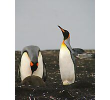King Penguins with Chick and Egg Photographic Print