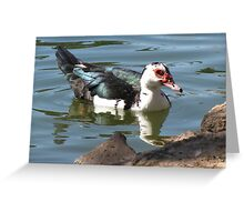 Muscovy Duck ~ Feral (Female) Greeting Card
