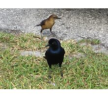 Two Dreaming Birds Photographic Print