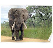 The ELEPHANT (Loxodonta Africana) Poster