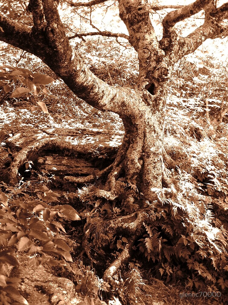 Gnarled Tree in Sepia by glennc70000