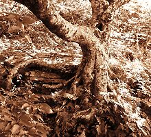 Gnarled Tree in Sepia by Glenn Cecero