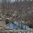 Little creek with downed trees by mltrue
