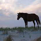 America Is Beautiful-Assateague Island Wild Horse, Maryland by Sandra Fazenbaker