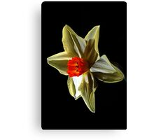 Daffodil head Canvas Print