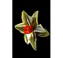 Daffodil head Photographic Print
