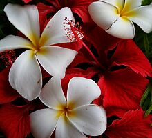 Frangipani and Red by DianaC