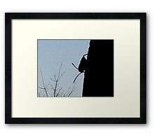 Bug On A Fence Framed Print