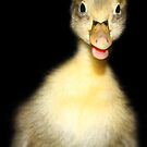 "Duckling says ""Hello"". by Doty"