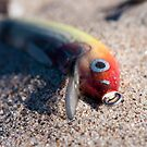 Abandoned Lure by Gary Chapple