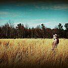 In Fields of Gold (II) by Jennifer Rhoades