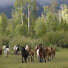 Wild Horses by WesternArt