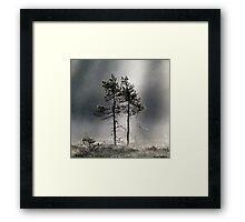 12.9.2015: Pine Trees, Autumn Morning II Framed Print