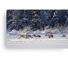 Reindeer Races Canvas Print