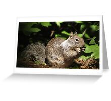 Cute Squirrel Photo and Cell Phone Case Greeting Card