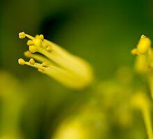 Lemon and Lime by BoB Davis
