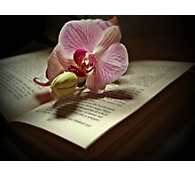 A Story Of An Orchid Photographic Print