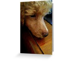 Innocence- Toy poodle Greeting Card