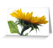 I don't care what those people may say - I'm not giving up on Love (2) Greeting Card