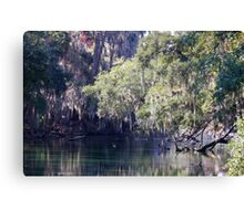 Moss At Blue Springs Canvas Print
