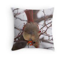 Cardinal female Throw Pillow