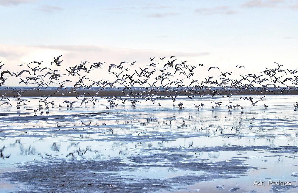 Seagulls on the beach by Adri  Padmos