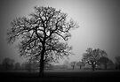 Winter Trees by Darren Burroughs