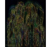 The beauty of the weeping willow Photographic Print