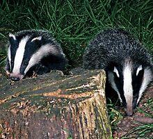 Badger Cubs by ten2eight