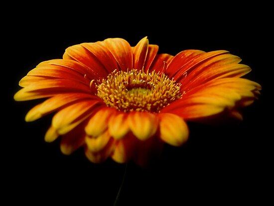 Floral Flames by Aj Finan