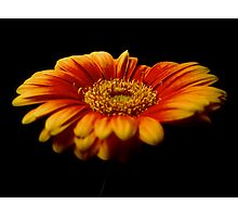 Floral Flames Photographic Print
