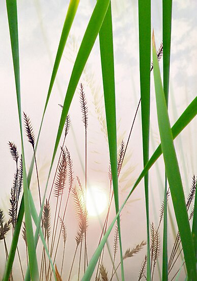 through the looking grass by John Poon