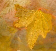 Autumn Leaf by BoB Davis