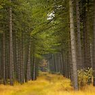Army of Pine by LarsvandeGoor