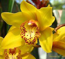 yellow cymbidium orchid by foozma73