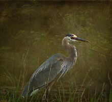 The Heron by swaby