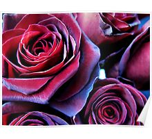 Roses for sale Poster