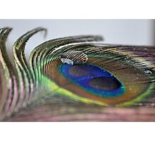 Peacock's Feather Photographic Print