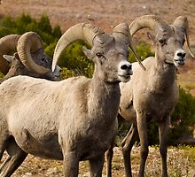 Welcoming committee in northern Wyoming by Alex Cassels